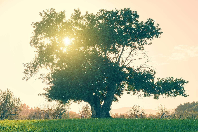 The Reason the Big Tree Fell - World Mission Society Church of God